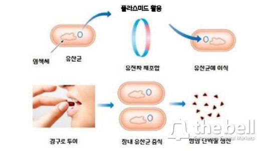 쎌바이오텍 대장암 치료제(유전자 치료제) 모식도_수정본